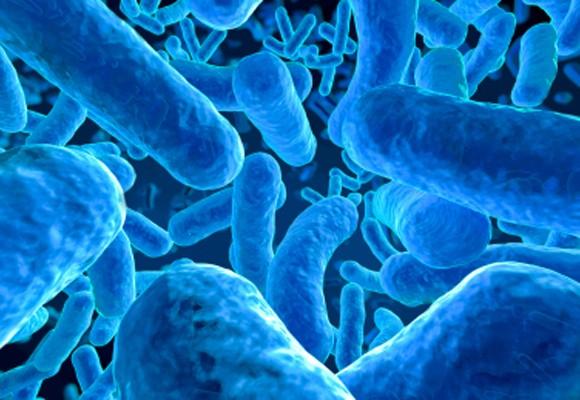 probioticos a granel