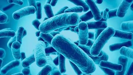 probioticos a que ayudan
