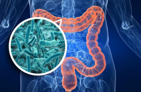 probioticos marcas