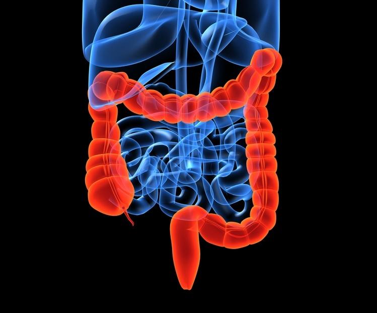 robioticos y prebioticos para niños