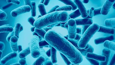 probioticos naturales alimentos fermentados