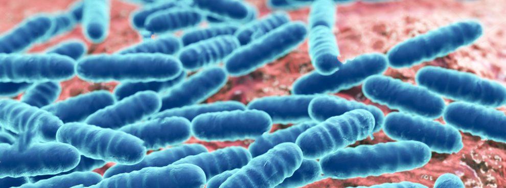 probioticos herbolario