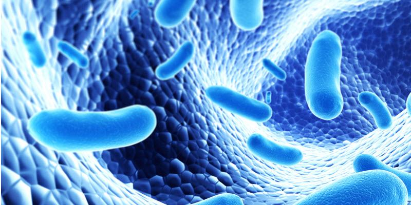 probioticos para bebes marcas