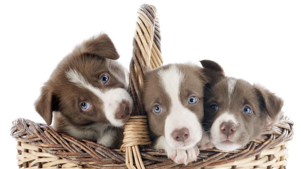 probioticos para perros naturales