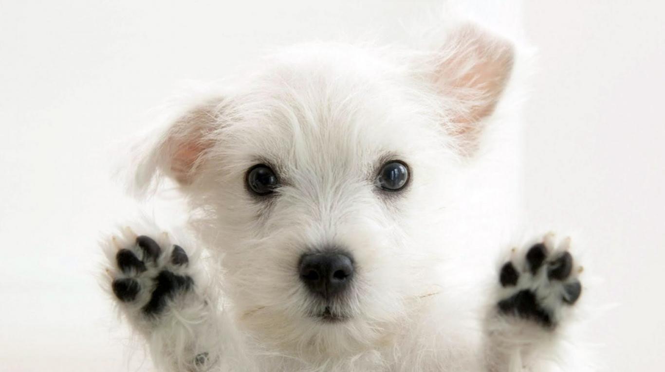 probioticos para perros es bueno