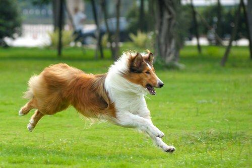 probioticos para perros con diarrea
