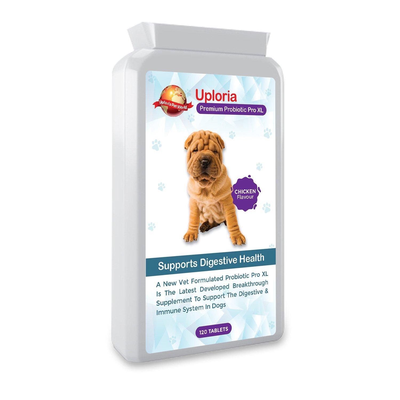 alimentos con probioticos para perros