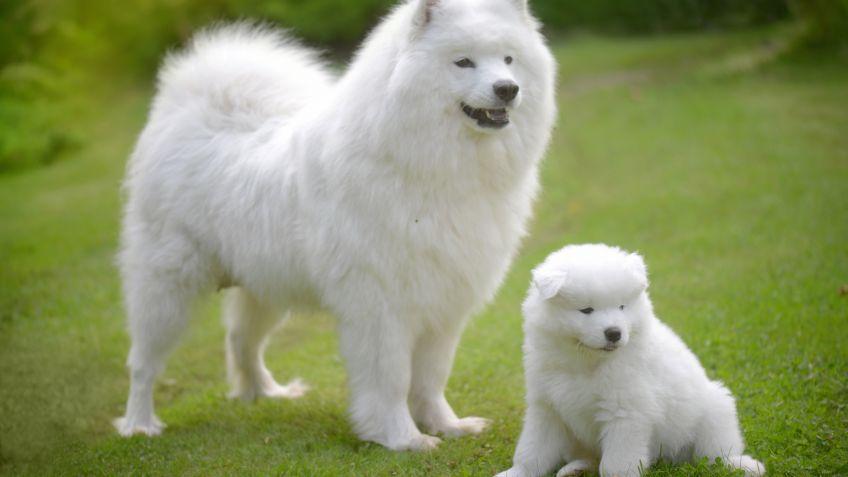 suplemento alimenticio con probioticos para perros