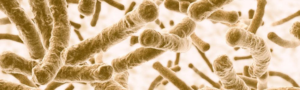 suplementos probioticos naturales