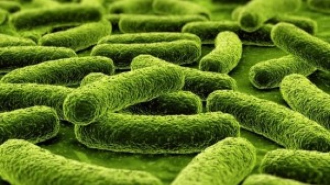 suplementos probioticos de alta calidad