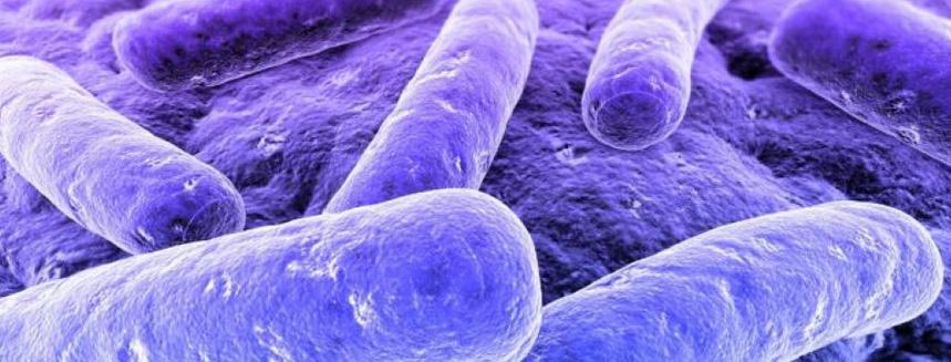 suplementos probioticos embarazo