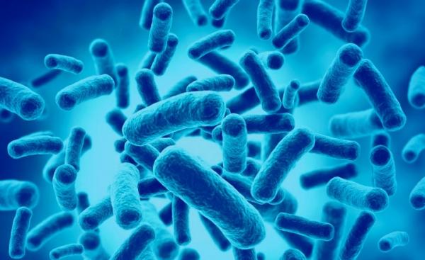 suplementos alimenticios probioticos