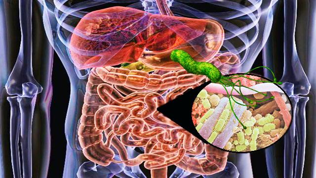 suplemento probiotico align