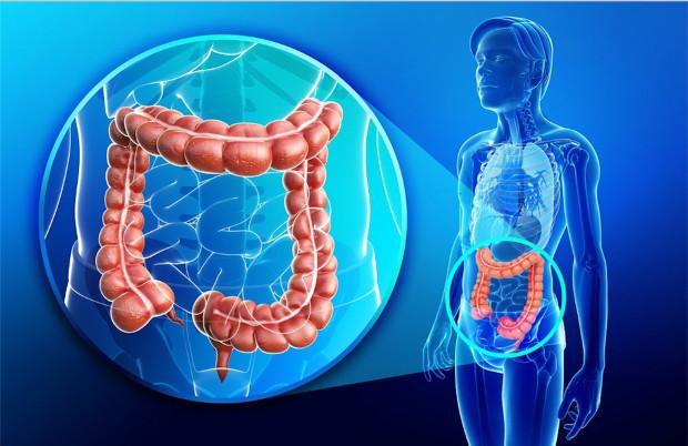 suplemento probiotico acidophilus