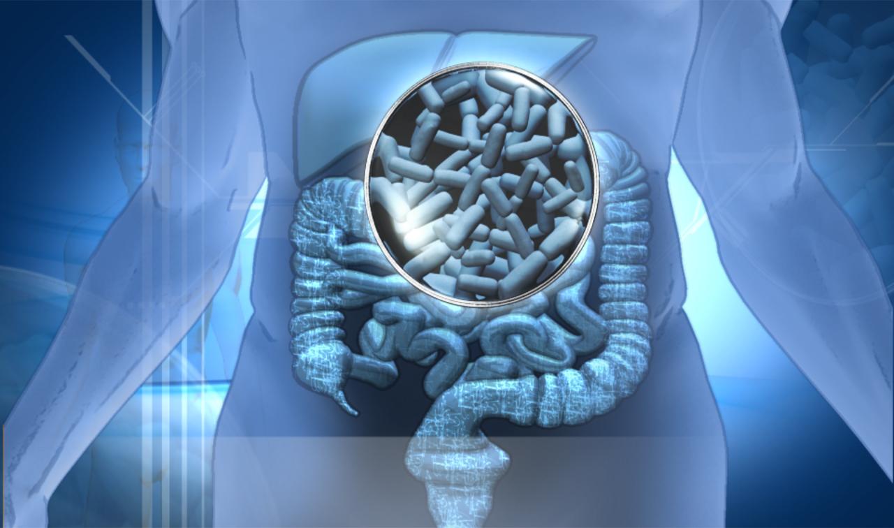 cuando tomar probioticos con antibioticos