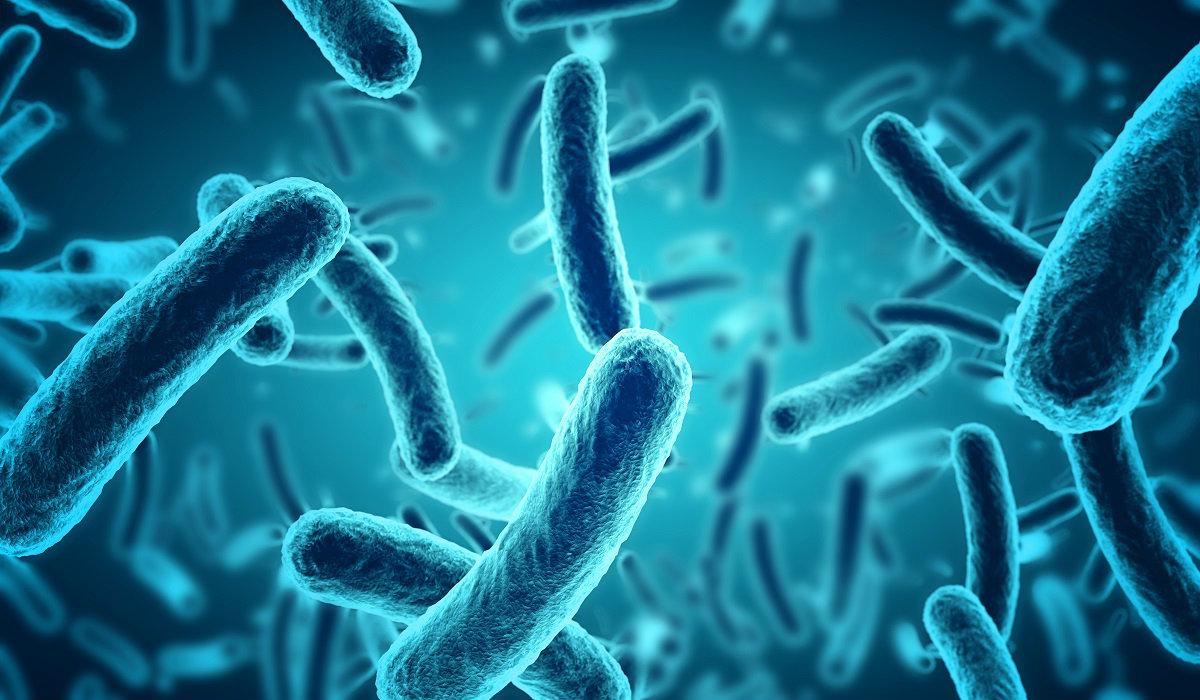 ovulos probioticos precio